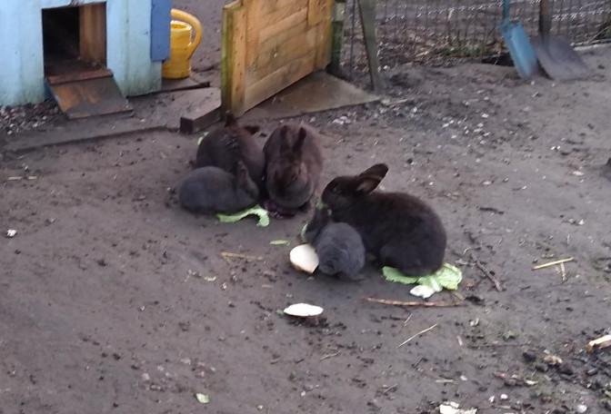 Kaninchen im Auslaufgehege